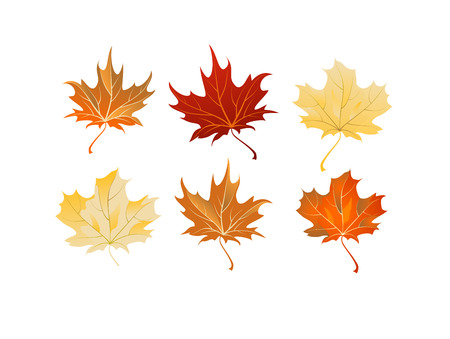 brown: Maple leaves set Illustration
