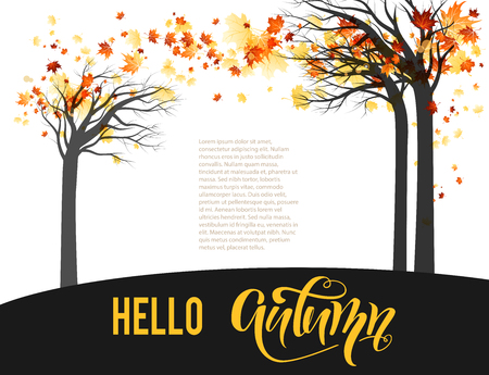 autumn background: Orange maple trees
