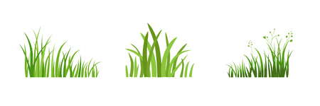 Grass icon. Silhouette of green plants for logo or sign. Eco style. Spring or summer seasonal illustration. 일러스트