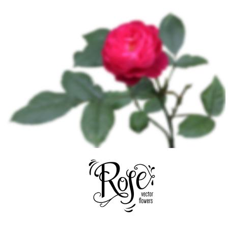 Red blur rose Ilustração