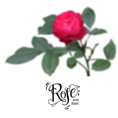 Red blur rose Illustration