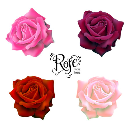 Roses flowers set