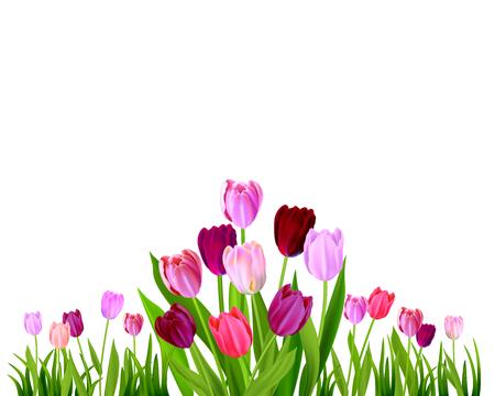 Isolated Tulip spring banner Vector illustration. Illustration