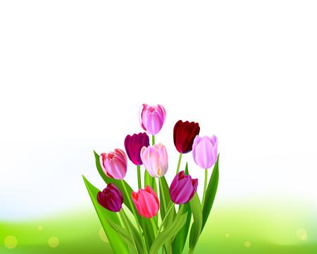 Background Tulip spring banner