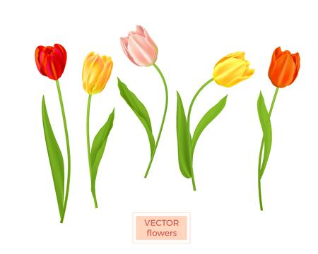 Isolated tulips flowers set