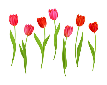 Elements Isolated tulips flowers
