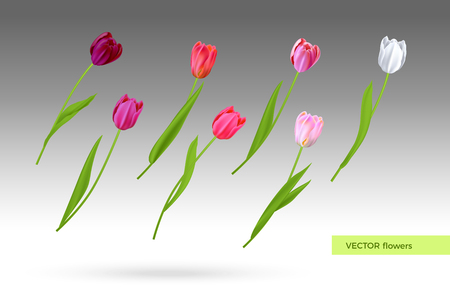 Vector set of tulips flowers