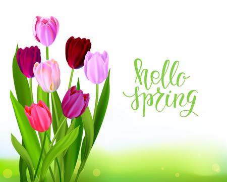 Lettering Tulip spring banner 向量圖像