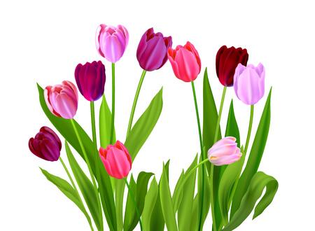 Bouquet of tulips design