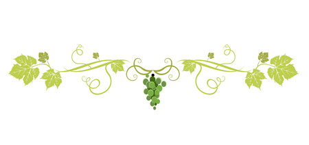 Grüner Traubenteiler Vektorgrafik