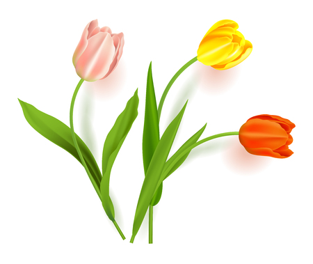 Realistic vector colorful tulips set. Spring flowers background. Bouquet of tulips isolated.