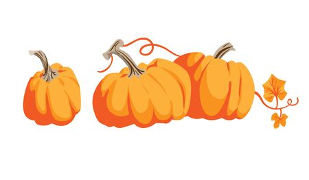 Nature vector elements. Thanksgiving symbol collection farm harvest, squash, vegetable. Pumpkins cartoon objects isolated.