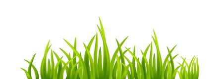 Spring green grass on isolated Banque d'images - 141619572