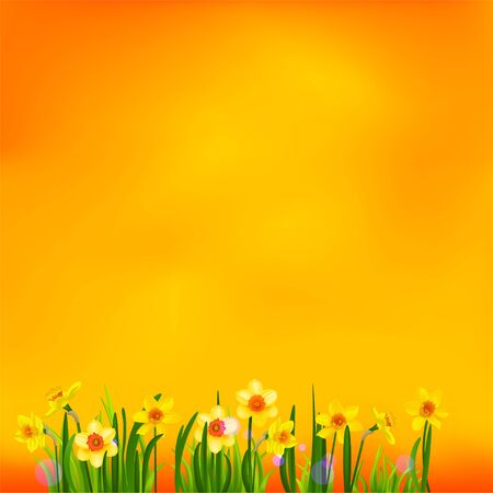 Floral spring background with daffodils. Place for text Illustration