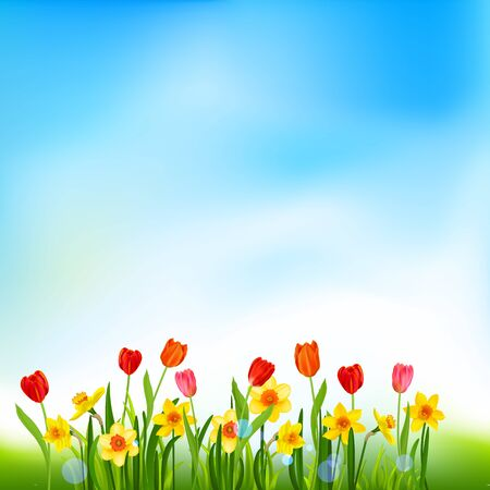 Blooming daffodils and tulips nature background