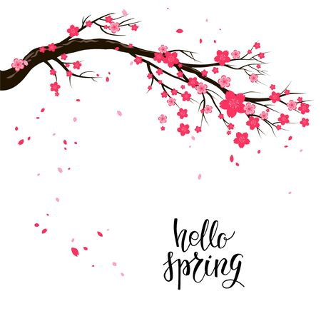 Cartoon cherry or sakura blossom branch and flying petals. Hello spring lettering. Seasonal nature symbol on a white background Illustration