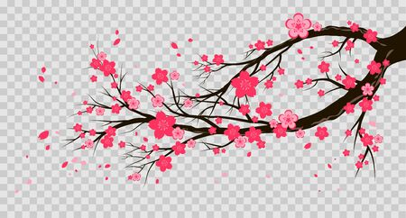 Spring pink blooming cherry or sakura branch and flying petals. Seasonal symbol isolated on a transparent background