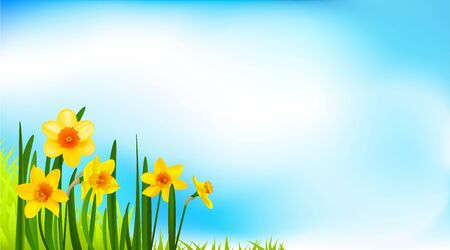 Spring blossom banner with daffodils