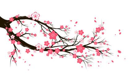 Cherry blossom branch Vectores