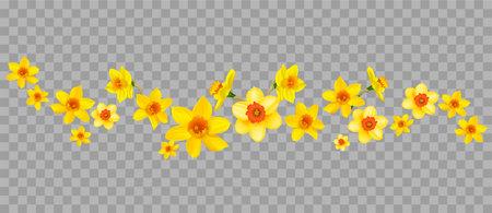 Daffodils decor on transparent background