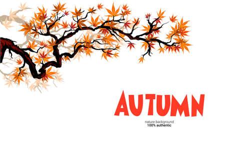 Autumn asian maple branch
