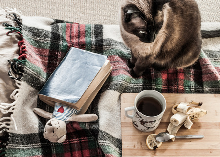 sloppy: Peaceful, a bit sloppy scene - relax with book and a cat.