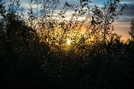 gramineous: Shadow of grasses and wild flowers under the sun of dawn, color effect image