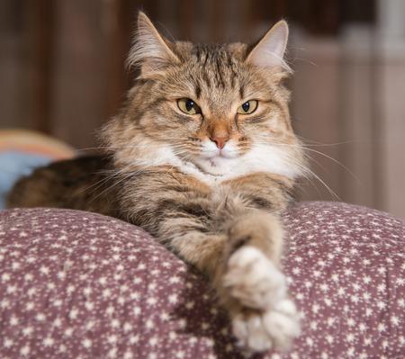 Gato, gato descansando en un sofá en el colorido fondo borroso Foto de archivo