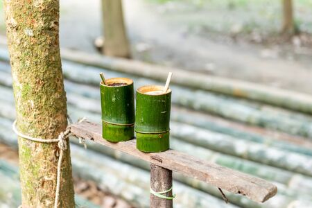 Green bamboo cylinder coffee, tea cup, nature product from bamboo, with mountain view background
