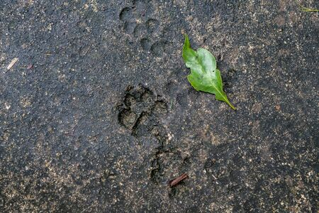 Traces from animals, dogs, cats on asphalt. Traces of animals in street tiles, textures and backgrounds, gray concrete, green leaf.