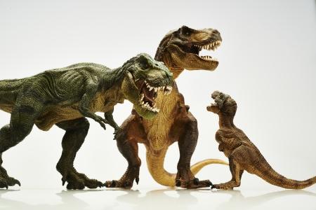 dinosaur teeth: dinosaur Stock Photo