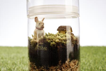 kleine und kleine Pflanzen schm�cken in Glasflasche