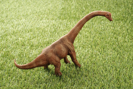 Close up Isolated dinosaur on grass background