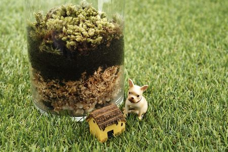 vivarium: small and little plants decorate in glass bottle Stock Photo