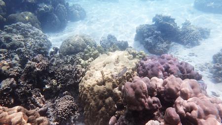 Coral and reef life at Moo Koh Surin Thailand Stock Photo