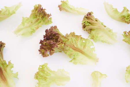 shooting red lettuce isolated on white background