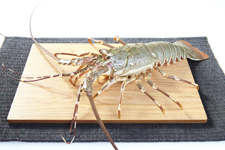raw lobster: fresh raw lobsters on the wooden plate in white background Stock Photo