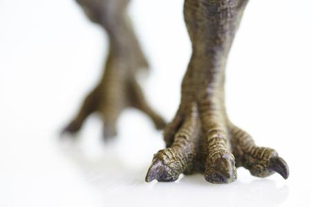 tyrannosaurus rex: disparar modelo de dinosaurio en el fondo blanco