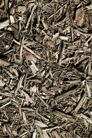 bark mulch: bark mulch for background