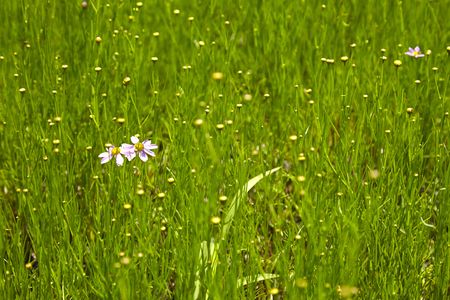 Background of little white flowers in park - USA