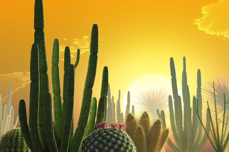 Sunset over a desert landscape with cactuses.
