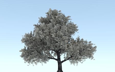impressive: Big tree in the park - In thailand Stock Photo