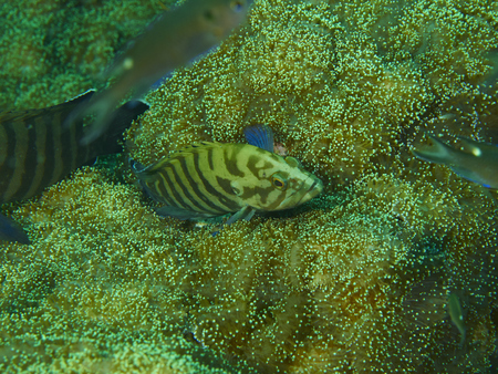 strobe lights: Coral reef and fish is a sea exotic and beautiful