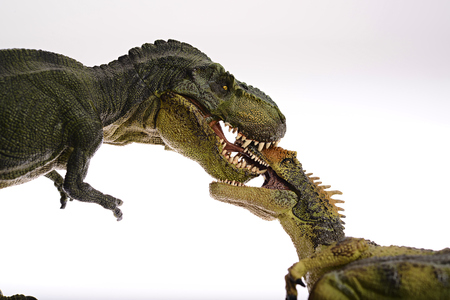 rousing: Isolated dinosaurs are fighting on white background Stock Photo