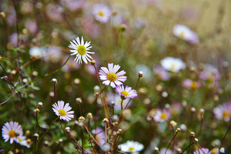 sweet grasses: Beautiful violet flower