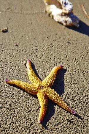 auf dem Sand Seestern Lizenzfreie Bilder