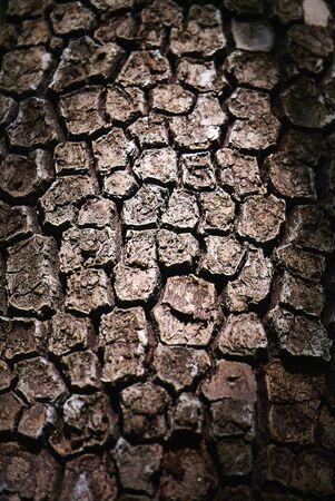 Bark von Pine Tree