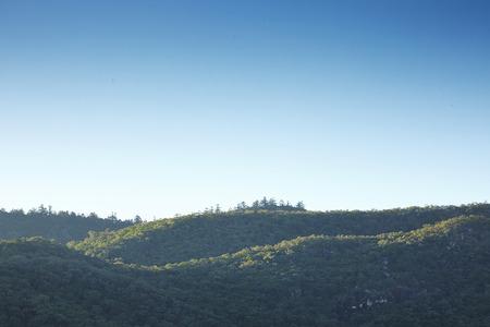 Waldb�umen. Natur gr�nen Wald Sonnenlicht Bildhintergrund