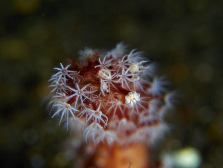 polyps: Tropical coral reef with coral polyps in Bali, Indonesia