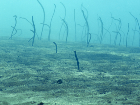 Field of eels at the bottom in bali, Indonesia